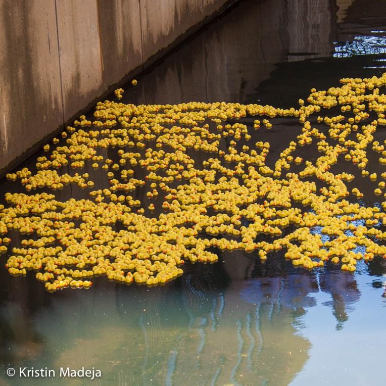duck race Kalamazoo