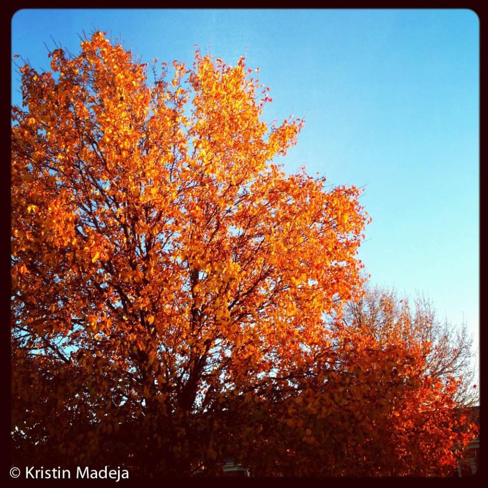 20121112blog1